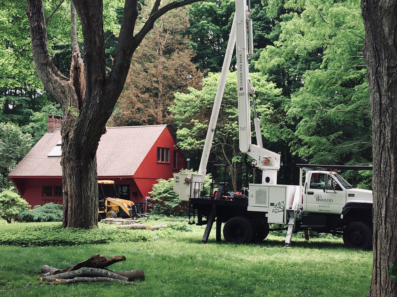 call Under the Bark for tree and stump removal - a division of Finkeldey Tree Services